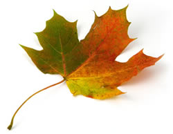 Somerset Borough Leaf Collection Dates